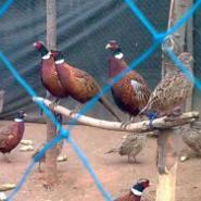 徐州笨鸡养殖场图片