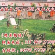 江门什么地方有卖边境牧羊犬图片