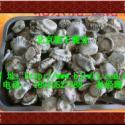 用于营养保健|补肾壮阳|活血消肿的鹿托盘粉价格,北京鹿肉多少钱