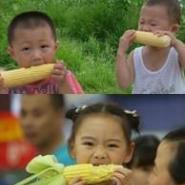 供应玉米是最重要的粮食作物,黑色杂交玉米的佼佼者单穗1斤以上的黑糯518