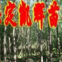 绿化楸树图片