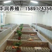 供应山西蜈蚣养殖特种动物陕西蜈蚣养殖