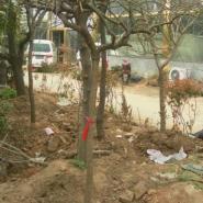 南京园林绿化苗木专供包成活图片