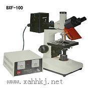 荧光显微镜图片