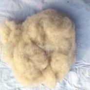 白绵羊绒图片