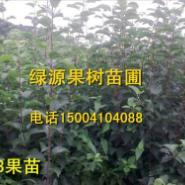 提供占地果树苗-123果树苗图片