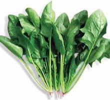 供应菠菜种子