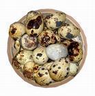 供应新鲜鹌鹑蛋批发