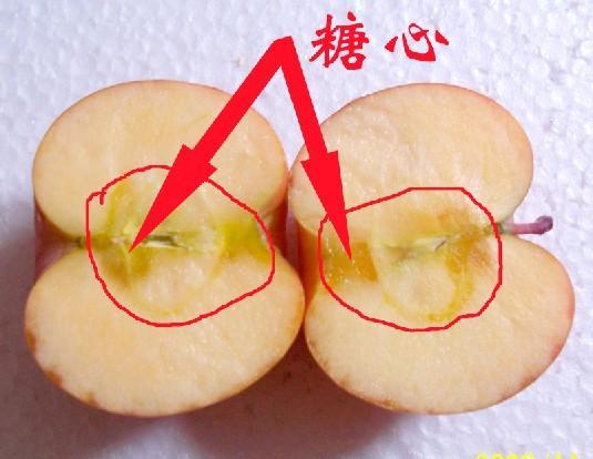供应冰糖心苹果厂/冰糖心苹果多少钱/冰糖心苹果多少钱一斤
