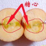 供应冰糖心苹果批发/最便宜糖心苹果/糖心苹果超低价