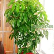南京植物租摆南京花卉租摆南京绿色图片
