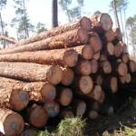 黄花梨木进口代理木材进口代理报关报价