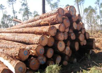 黄花梨木进口代理木材进口代理报关图片
