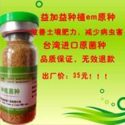 种植业专用em菌种菌液价格人参金图片