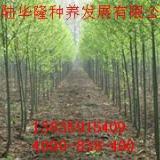 供应竹柳的市场价格,美国竹柳 竹柳