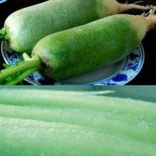 供应健康美味绿色食品沙窝萝卜批发