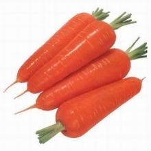 供应萝卜种子/萝卜种子价格/水果萝卜