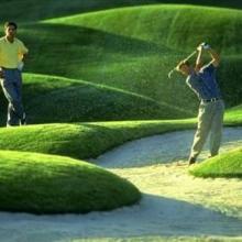 供应高尔夫草坪专用高品质菌肥批发批发