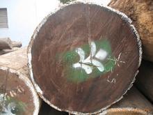 供应木材进口转关代理图片