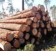 木材进口报关代理-国家政策