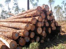 东非木材进口清关图片