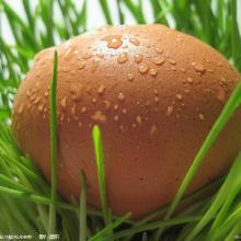 供应鲜鸡蛋、土鸡蛋、鹌鹑蛋、农家蛋、草绿蛋、咸蛋、皮蛋、鹅蛋