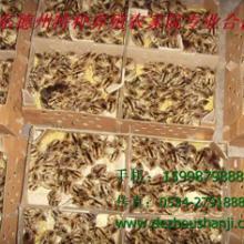 供应华南动物种苗