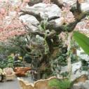 武威仿真树图片