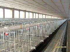 供应鸡用运输笼