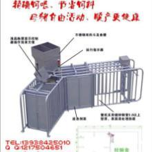 母猪散养设备/母猪饲喂设备/母猪群养设备