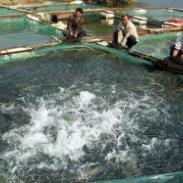 南美对虾养殖膜报价图片