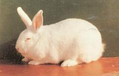出售各种散养品种的兔子图片