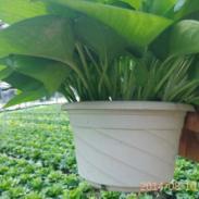 广州租花、园林设计,景观花卉,广州租花公司,绿化养护管理