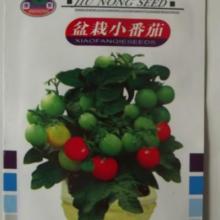 供应盆栽小番茄种子批发