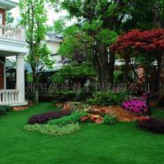 上海卢湾区哪里的别墅花园假山最便图片