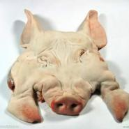 猪尾巴图片