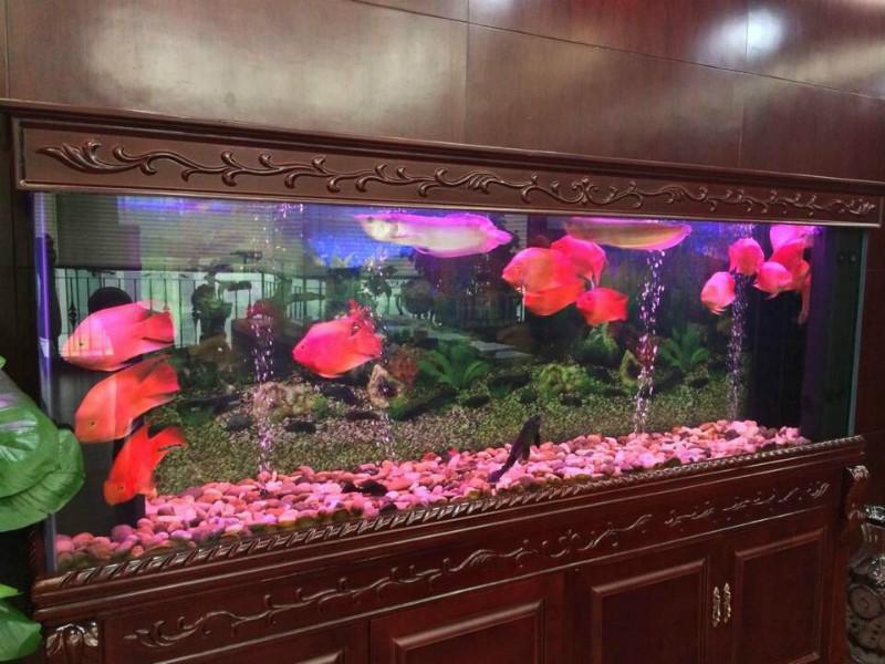立式鱼缸图片图片