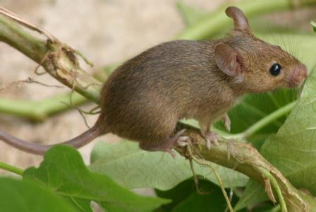 供应成华区灭鼠公司成都绿卫灭鼠公司