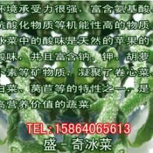 供应盛-奇绿雅叶用甘蓝萝卜硫素是蔬菜中抗癌效果最好的植物活性物质批发