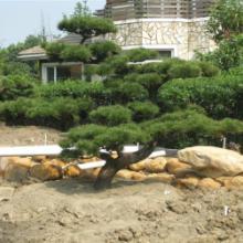供应绿化工程—承接上海园林景观工程—上海城市园林绿化工程施工