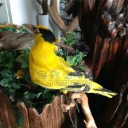 标本公司动物标本鸟类黄鹂标本图片