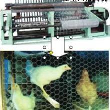 供应六角网机是笼网机捻网机出口新疆 丝网机械出口厂家