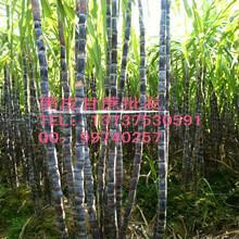 供应吉林省黑皮甘蔗,博白黑甘蔗,甘蔗批发,价格,行情,黑皮甘蔗