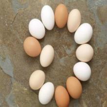 供应蛋白质粉适合农村办厂项目农民致富信息灵活轻松办厂批发