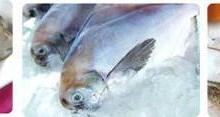 供应广州渔业博览会