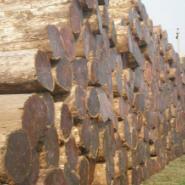 上海的柚木原木多少钱一吨图片