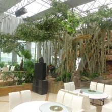 供应生态餐厅温室设计@专业品质的服务让您再无后顾自由批发