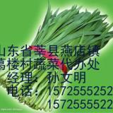 供应山东莘县蔬菜市场新鲜蔬菜农副产品