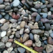 石家庄8-12cm公园鹅卵石图片