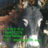 供应岳西县肉驴德州驴卖多少钱